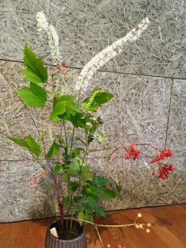 赤いのは珍しい カンボク(別名トリクワズ)。白の長いのはサラシナショウマ。これまたとても珍しいなかなか咲かないオケラも。ミズヒキが仲良く繋いでくれた哉。
