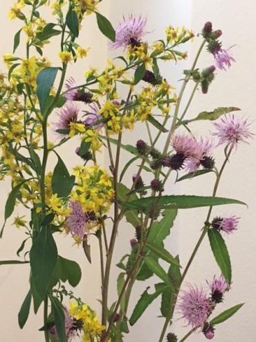 ナンブアザミ・アキのキリン草